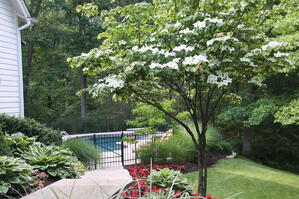 Tree and Shrub Care Service St. Louis MO