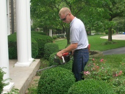 Tree and Shrub Trimming and Pruning Service St. Louis MO